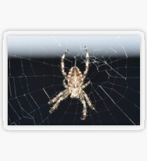 Arachnid Transparent Sticker