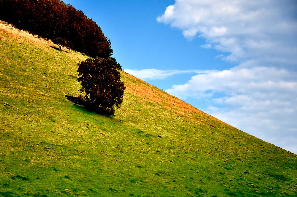 Tree on a Hill by Madison Jacox