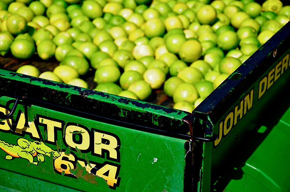 Limes by Madison Jacox