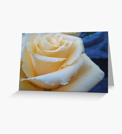 A Rose for Peace Greeting Card