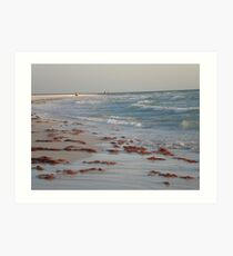 micro Floria peninsula Art Print