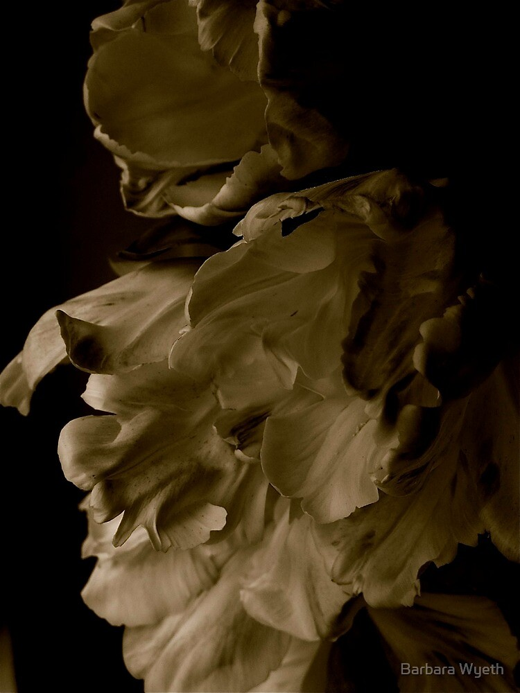 Libretto Tulips in Sepia by Barbara Wyeth