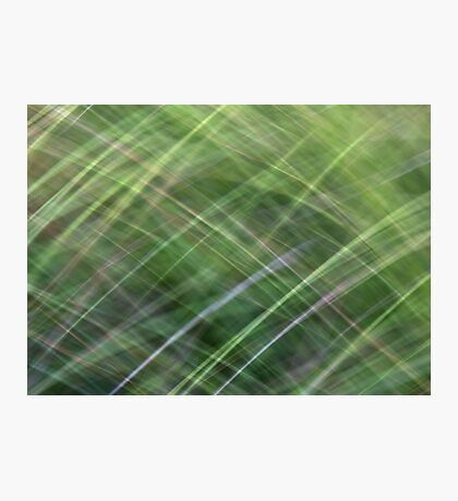 Impressionist Wild Grass Photographic Print