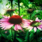 Cone Flowers ©  by Dawn Becker