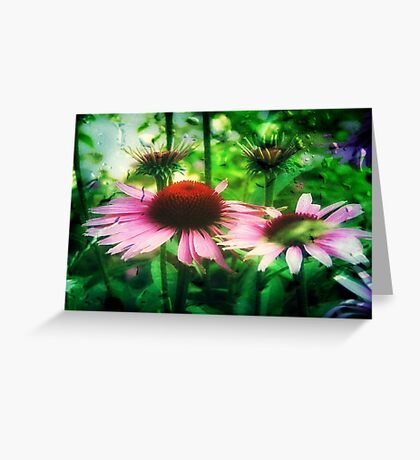 Cone Flowers ©  Greeting Card