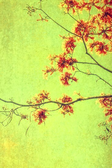Hope for Spring by Angela King-Jones