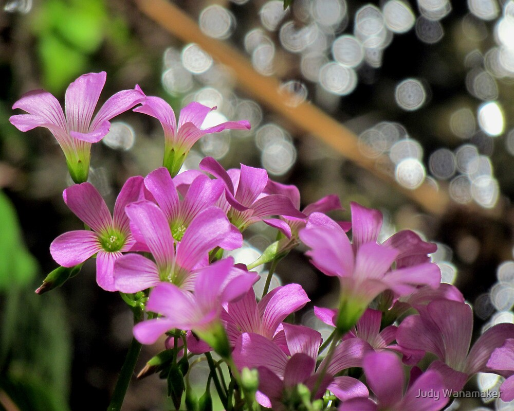 Spring Magic by Judy Wanamaker