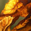 Twisted Hydrangea Leaves by Anna Lisa Yoder