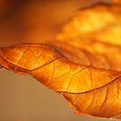 Hydrangea Leaf Tip by Anna Lisa Yoder