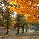 Fall at Old Davidsonville State Park by Susan Blevins