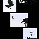Marauder by DigitallyStill