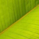 Backlit Banana Leaf Macro by Anna Lisa Yoder
