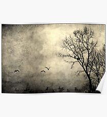 Birds of Hatzic Poster