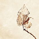 Textured leaf by Caroline Gorka