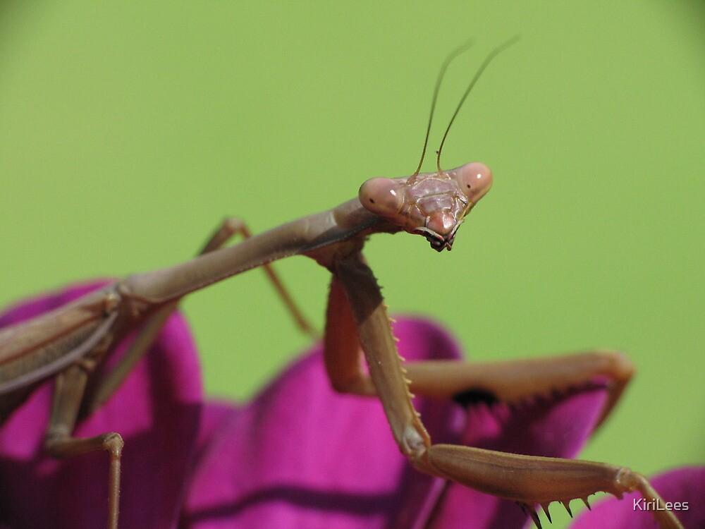 Praying Mantis! by KiriLees