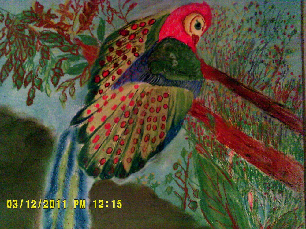 the great argus pheasant by larry carter