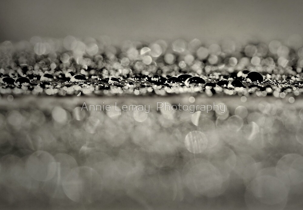 Sparkles of Nature by Annie Lemay  Photography