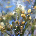 Springtime willow branch by Tummy Rubb Studio