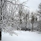 Spring Snow by debbiedoda