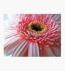 Up Close And Pink Photographic Print