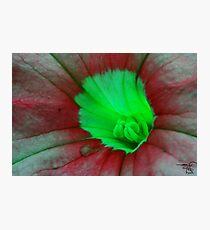 Floral macro-Pitunia Photographic Print