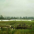 Route 101 Warrenton, Oregon by Terrie Taylor