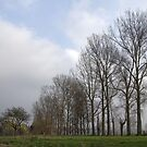 Majestic Tree Line by brimo