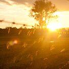 Sunset at Freemans Reach von Greg Shield