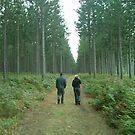 Tsitsikamma Forest Walk by Norman Perelson