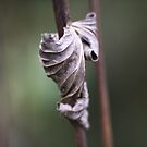 See the Beauty in a Dead Leaf by Clare Colins