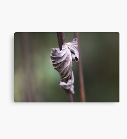 See the Beauty in a Dead Leaf Canvas Print