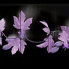 Leaves On Wood by hurmerinta