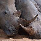 Rhino Love by Bobby McLeod