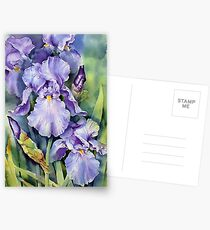 Dewdrop Irises Postcards
