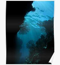 Gorgonian swim through Poster