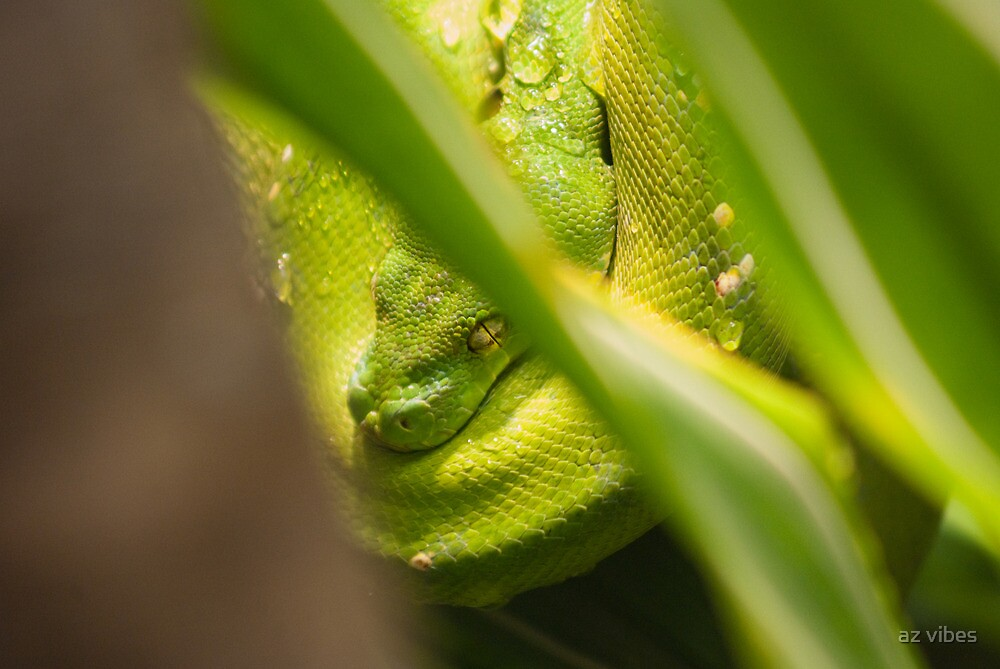Green Snake by Chris Driscoll