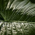 Leaf Green by timmburgess