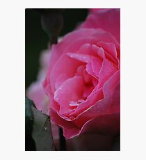 Moody Pink Rose Photographic Print