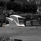 Seagull going by by Esther  Moliné