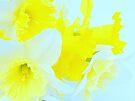 Color Splash by NatureGreeting Cards ©ccwri