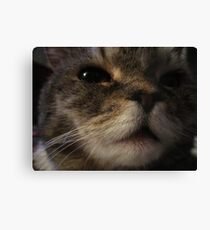 Furry Face Canvas Print