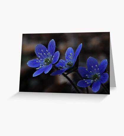 Pretty Little Trio Greeting Card
