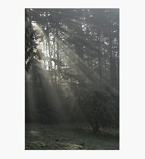 Sun Rays through the Trees on a Foggy Winter Day Photographic Print