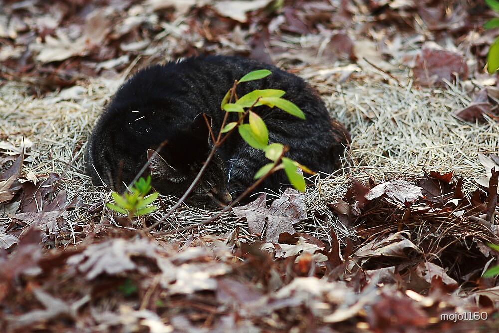 Cat Nap Fever by mojo1160