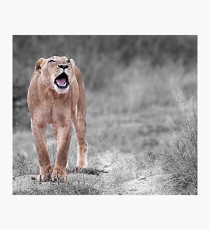 The Roar Photographic Print