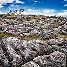 Limestone Pavement by Geoff Carpenter