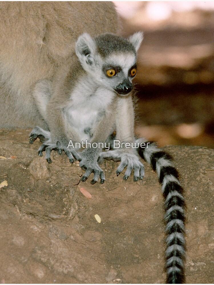 Baby lemur by dailyanimals