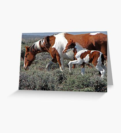 Wild Pinto Foal, Red Desert, Wyoming Greeting Card