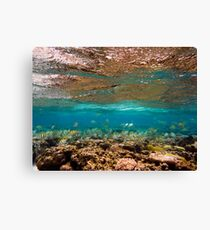 110313 Snorkel 5 Canvas Print