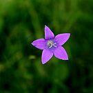 soft purple by KatrinKirieshka